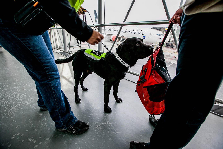 feb5ad7b Reportasjefoto - Valutahunden BEN - Oppdrag for Tolldirektoratet ...
